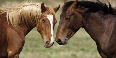 amazing-horses-love-animals-nature-desktop-free-wallpaper