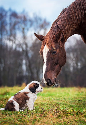 Horse with dog thumbnail
