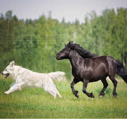 Dog and horse running 2017