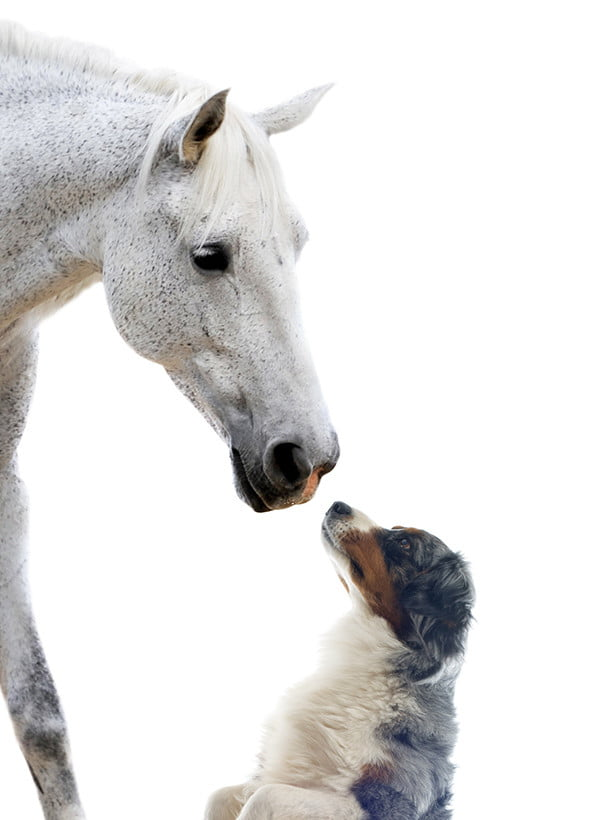 Horse white and dog 600