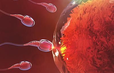 Osteopathic approach to supporting fertility