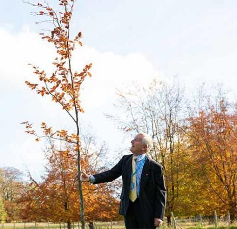 John Barkworth Tree web