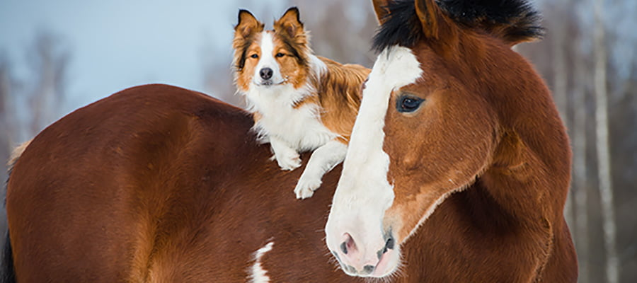 Horse and Dog 2018 900